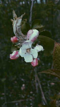 #flower #flowers #dark #photography