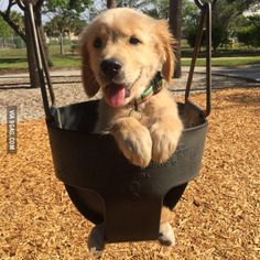 Took my Golden Retriever Puppy to the park