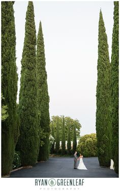 Love these huge Cyprus trees for shots Wedding Pics, Wedding Venues, Wedding Ideas, Grand Island Mansion, Photography Ideas, Wedding Photography, Cyprus, Shots, Trees