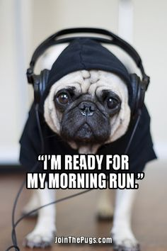 Join The Pugs!