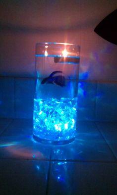 1000 Ideas About Beta Fish Centerpiece On Pinterest