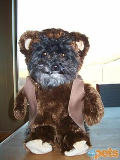 Can't believe this is not a stuffed animal and actually a dog in a #Halloween costume. Too cute! http://www.people.com/people/package/gallery/0,,20058392_20634463,00.html#21224511
