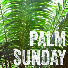 "Palm Sunday is the day we remember the ""triumphal entry"" of Jesus into Jerusalem, exactly one week before His resurrection. Some 450-500 years earlier, the Prophet Zechariah had prophesied, ""Rejoice greatly, O daughter of Zion! Shout, O daughter of Jerusalem! Behold, your King is coming to you; He is just and having salvation, Lowly and riding on a donkey, A colt, the foal of a donkey"" (Zechariah 9:9). Matthew 21:7-9 records the fulfillment of that prophecy."