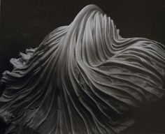 imperfect, impermanent and incomplete — Cabbage leaf, photo by Edward Weston, 1931.