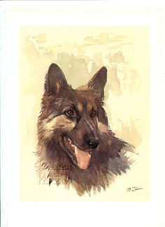 Tervueren Shepherd Dog   Dog vintage print 1975 by FrenchOldPapers