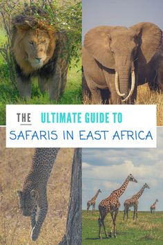 Safari's in Africa are one of the best wildlife experiences in the world. This is a detailed list of the best safari's you can do in East Africa.