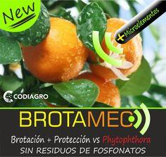 Brotamec®, protección frente a Phytophthora en cítricos, sin residuos.