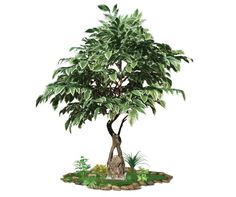 artificial ficus indoors spacegreen Ficus, Greenery, Trees, Indoor, Interior, Tree Structure, Figs, Fig, Wood