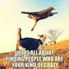 #Life is all about #finding #people who are your kind of #crazy   #LetsGetWordy