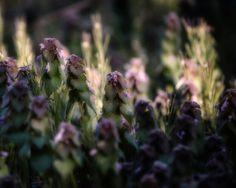 Morning light... Blink Photography, Morning Light, Plants, Plant, Planets