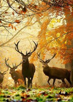 Beautiful Photo, Richmond Park, London
