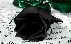 Czarna, Róża, List