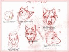 Wolf drawing tutorial by B-theawsomegeek.deviantart.com
