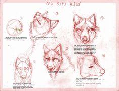 Wolf drawing tutorial by B-theawsomegeek.deviantart.com