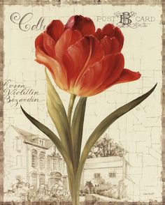 Garden View III - Red Tulip