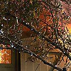50 Everbright Solar Fairy Lights in garden lighting and ornaments at Lakeland Solar Fairy Lights, Palm Garden, Diy Pallet Wall, Garden Illustration, Pallets Garden, Small Garden Design, Garden Accessories, Garden Crafts, Garden Inspiration