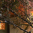 50 Everbright Solar Fairy Lights in garden lighting and ornaments at Lakeland