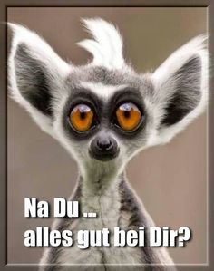 Very Funny Animal Faces : Funny Pictures Funny Animal Faces, Funny Animal Videos, Funny Animals, Videos Funny, The Animals, Baby Animals, Baby Lemur, Cute Puppies, Cute Dogs