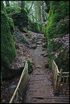 Puzzlewood Forest of Dean, Wales