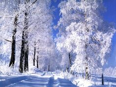 Cheap Ski Holidays for Early Birds! Winter Szenen, Winter Is Here, Winter Trees, Winter Holidays, Snowy Trees, Winter Images, Winter Pictures, Cheap Ski Holidays, Russian Winter