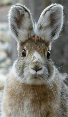 rabbit, bunny, and cute afbeelding The Animals, Baby Animals, Funny Animals, Funny Bunnies, Cute Bunny, Bunny Bunny, Beautiful Creatures, Animals Beautiful, Little Critter