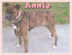 Country Annie found a furever family that is going to teach her to become a city girl. Yea! Annie