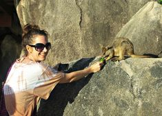 Tuesday in Townsville. Feeding Rock Wallaby on Magnetic Island. Australia Travel, Western Australia, Vsco, Melbourne Restaurants, Bruny Island, Wildlife Nature, Great Barrier Reef, Tasmania, Travel With Kids