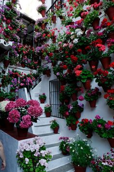 for the love of geraniums in the patios de cordobas - taringa! Amazing Gardens, Beautiful Gardens, Vegetable Garden Fertilizer, Garden Spaces, Dream Garden, Flower Decorations, Garden Inspiration, Container Gardening, Flower Pots