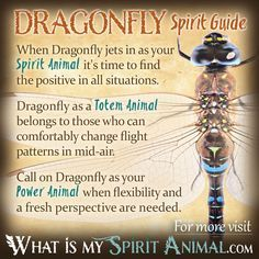 In-depth Dragonfly Symbolism & Dragonfly Meanings! Dragonfly as a Spirit, Totem, & Power Animal. Plus, Dragonfly in Celtic & Native American Symbols & Dragonfly Dreams! Dragonfly Symbolism, Dragonfly Quotes, Dragonfly Art, Dragonfly Meaning Spiritual, Dragonfly Images, Spirit Animal Totem, Animal Spirit Guides, Your Spirit Animal, Butterfly Spirit Animal