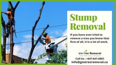 To remove branches and the tree, along with its roots requires a lot of hard work. Once you get the easier parts done with tools you may have had to borrow or rent, the job is still not finished. Call at now. Stump Removal, Gta, Hard Work, The Borrowers, Branches, Knowing You, Roots, How To Remove, It Is Finished