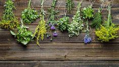 Bylinky jsou výbornými partnery, ale i ochránci zeleniny Resort Spa, Plants, Stay At Home, Home Remedies, Lawn And Garden, Time Out, Health, Plant, Planets