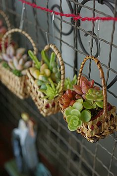 Tiny succulent baskets as a gift, ornament, or party favor