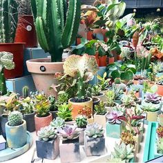 Concrete Planters, Planter Pots, Brixton Market, Green Rooms, South London, Plant Decor, Masters, September, Sunday