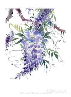 Wisteria Garden II Posters by Nan Rae at AllPosters.com