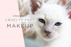 Ultimate guide to cruelty-free and vegan makeup brands! Includes everything from high-end to drugstore, as well as top picks from each brand.