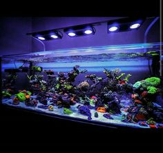 33 best reef tank ideas images marine aquarium aquarium ideas rh pinterest com saltwater aquarium design ideas saltwater aquarium aquascaping ideas