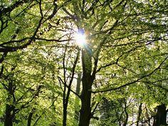 A deciduous beech forest near Merzig, Saarland, Germany.