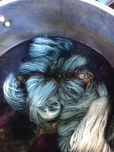 1-day dye process for fresh indigo leaves