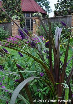 Buddleia davidii 'Black Knight' and Pennisetum rubrum 'Prince' - info and photo via Pam Penick and her excellent blog, 'Digging' http://www.penick.net/digging/?p=12168