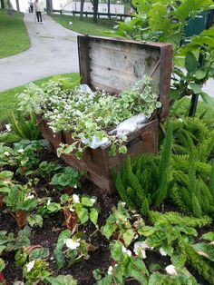 An old metal trunk used as a planter. A false bottom was added so as to not have to fill the trunk with soil. Can't imagine the trunk lasting very long. But these old trunks are a dime a dozen. Oshawa, Ontario.