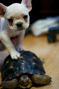 Murdock says my turtle!