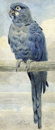 Hyacinthine Macaw by Henry Stacey Marks - Hyacinthine Macaw Painting - Hyacinthine Macaw Fine Art Prints and Posters for Sale