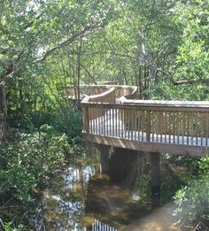 Gumbo Limbo Nature Center, Boca Raton, FL. We cant wait to see all the Sea Turtles!Great for kids!