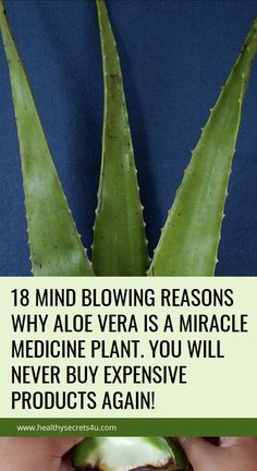 18 Mind Blowing Reasons Why Aloe Vera Is A Miracle Medicine Plant. You Will Neve. 18 Mind Blowing Reasons Why Aloe Vera Is A Miracle Medicine Plant. You Will Never Buy Expensive Products Again! Natural Home Remedies, Natural Healing, Herbal Remedies, Health Remedies, Natural Oil, Cold Remedies, Diarrhea Remedies, Bloating Remedies, Gardens