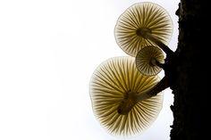 Fungi on white