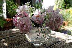 Roses Mortimer Sackler  Orlaya grandiflora