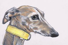 ITALIAN GREYHOUND ART. Pino the Iggy. 8 x 6 inches, colour pencil on white paper. https://www.etsy.com/shop/JimGriffithsArt?ref=hdr_shop_menu
