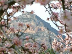 Our mountain Montgo through the almond blossoms, which are full - in pink and white - during blooming. Lived in Javea, and have many loving memories.