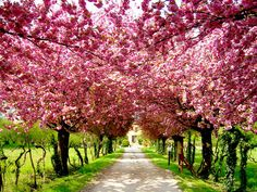 One day pink trees will lead me to my house!