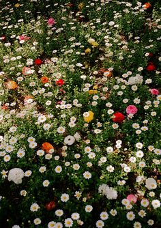 33 Ideas For Plants Photography Nature Wild Flowers Deco Floral, Arte Floral, Wild Flowers, Beautiful Flowers, Field Of Flowers, Flowers Nature, Floral Flowers, Cheap Flowers, Meadow Flowers